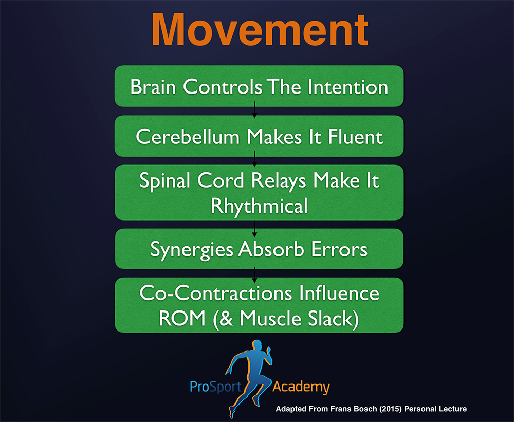 Movement, Adapted From Frans Bosch Lecture To The 'Go-To' Therapist Mentorship Group, 2015