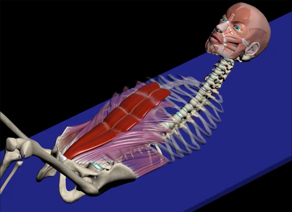 The role of the rectus abdominis in ribcage depression and glenohumeral rotation. Image provided by Muscle & Motion