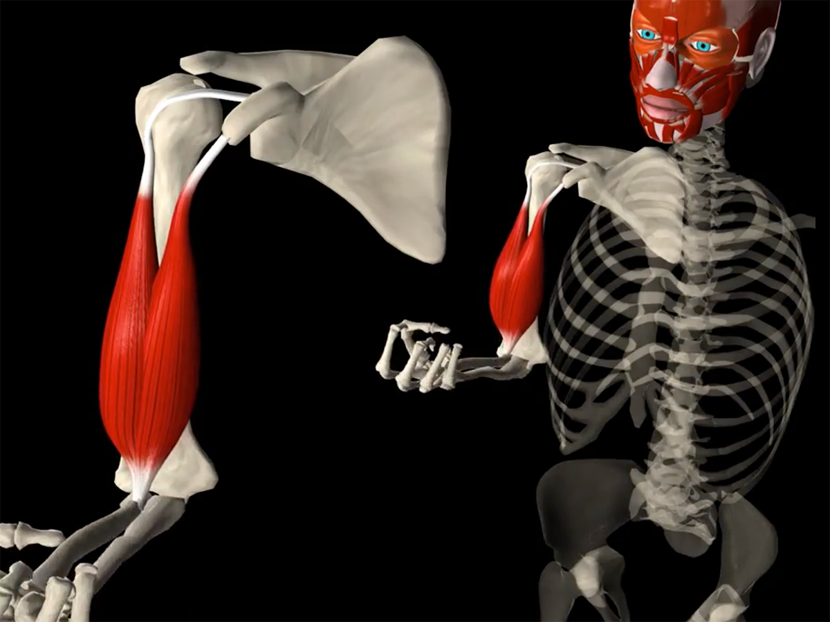 The biceps influence on the glenoid labrum physiotherapy