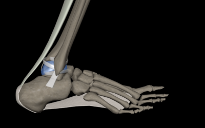 How To Assess And Improve Ankle Dorsiflexion Once And For All
